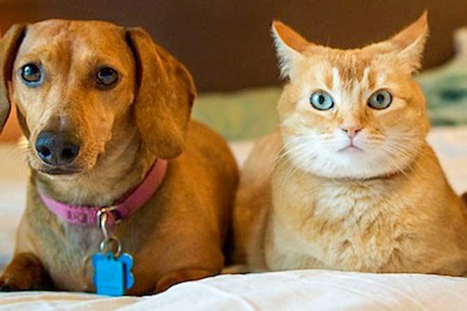 Порядок содержания домашних животных: За нарушение – штраф