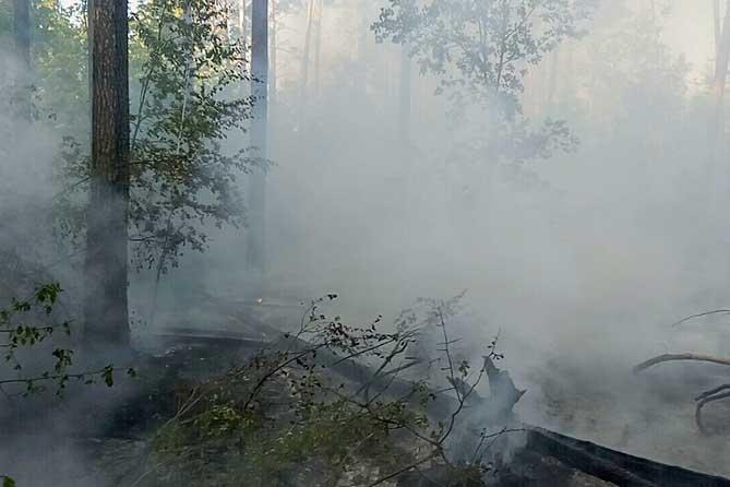 Квадрокоптер обнаружил поджигателей леса в Тольятти