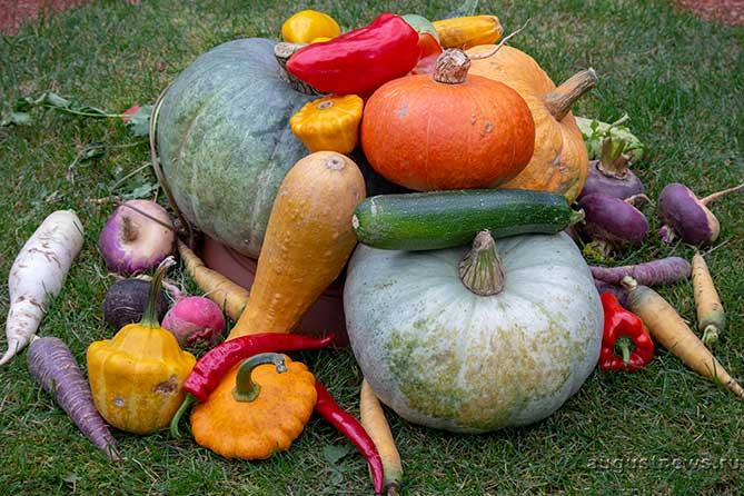 С 7 по 10 сентября 2018 года в школах Тольятти пройдет конкурс «Золотая осень»