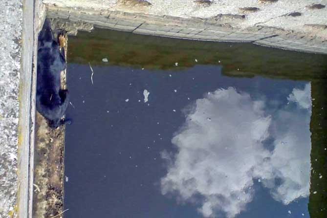 Спасатели Тольятти спасли собаку из ливневки
