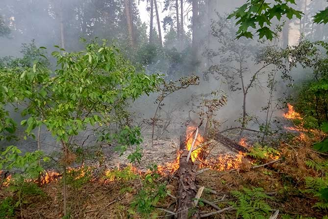 Продолжаются возгорания в лесном массиве Тольятти