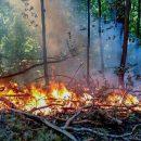 Администрация Тольятти пытается поймать поджигателей, но пока безуспешно
