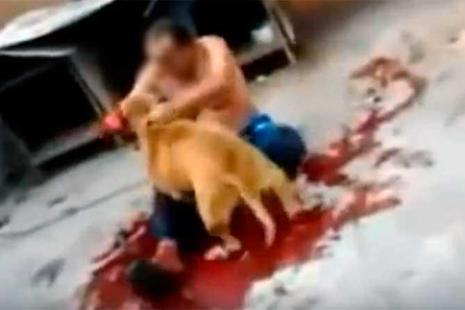 Мужчину искусала собака: серьезно повреждено лицо