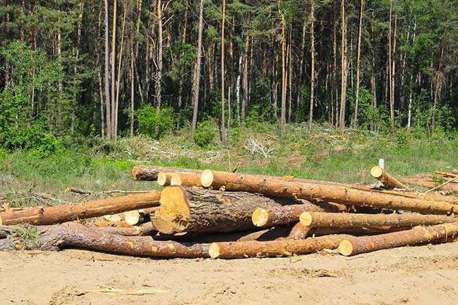 В Тольятти решили судьбу границ городских лесов
