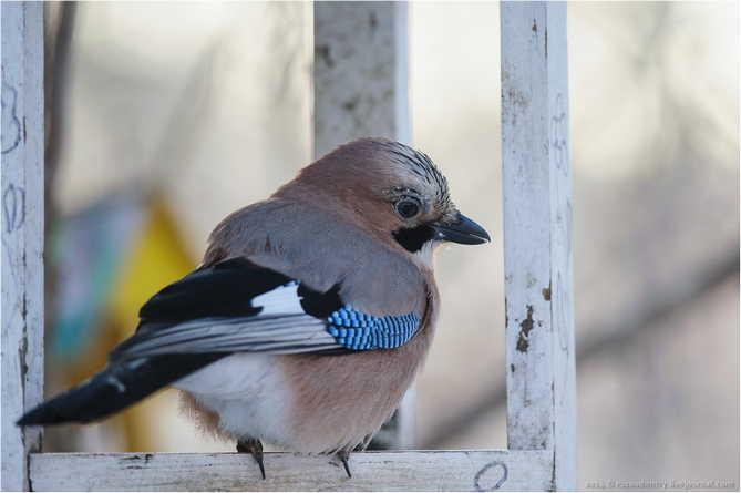 Птицы-зимники прилетели