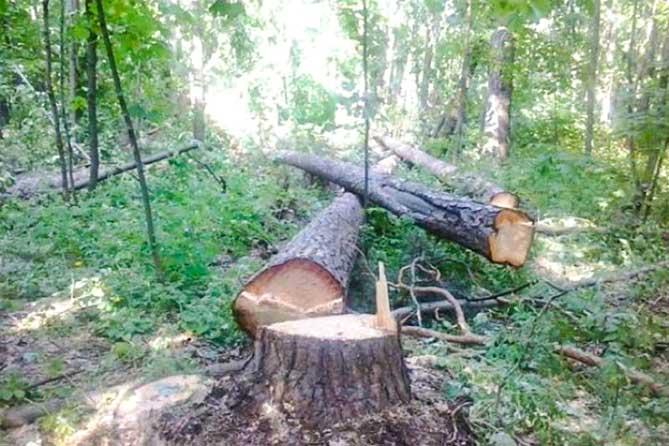 Вырубят пять гектаров леса между Центральным и Комсомольским районами, но компенсируют лесопосадкой в Шлюзовом