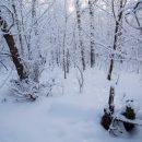 Юрьев день 9 декабря – Юрий холодный