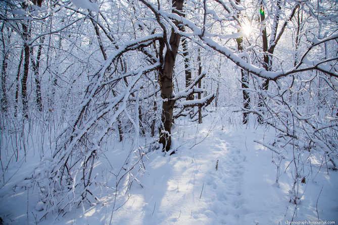 Погода в Тольятти с 29 января по 1 февраля 2019 года