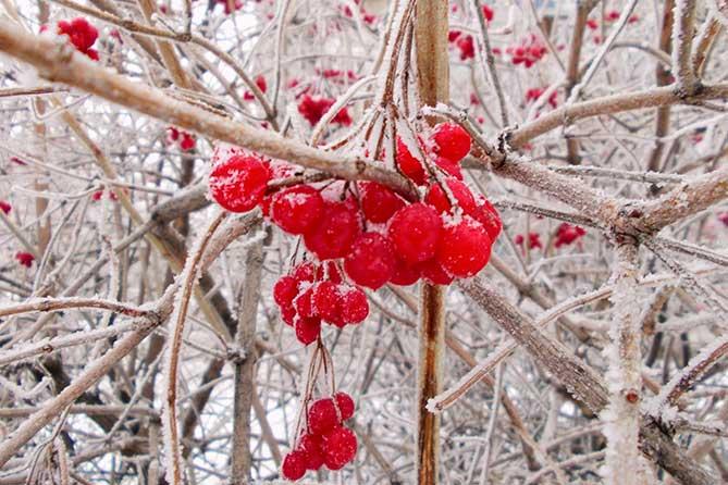 Погода в Тольятти со 2 по 4 января 2018 года: Снег и изморозь