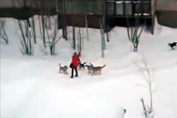 Сколько «откусят» от нас собаки в Тольятти