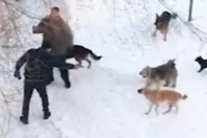 Стрельба по собакам и хозяину животных: Видео конфликта вызвало резонанс среди жителей