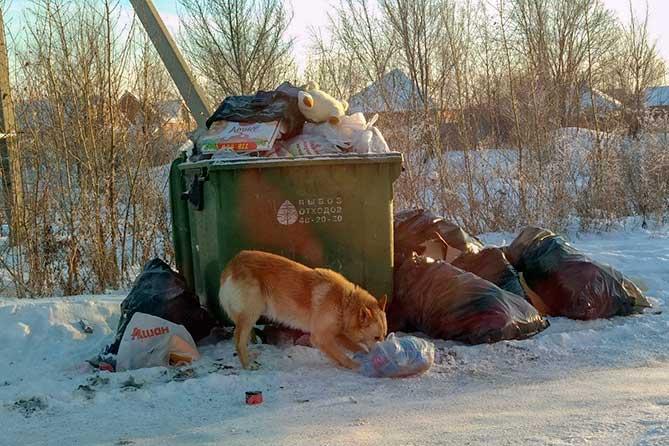 Где снова будет подниматься тема вывоза мусора в Тольятти