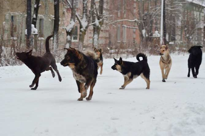 В Тольятти бездомные собаки напали на ребенка: Бригада отлова разыскивает стаю животных