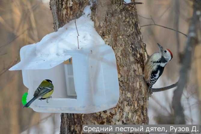 Фотоконкурс «Большой год» посвящен птицам