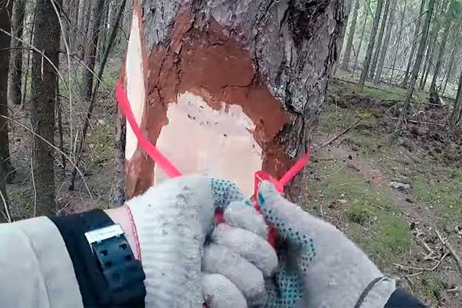 Шикарно, я считаю: Площади леса Тольятти посчитаны, измерены и… утеряны