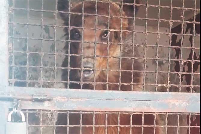Из кафе в Тольятти забрали медведя и передали фонду защиты животных