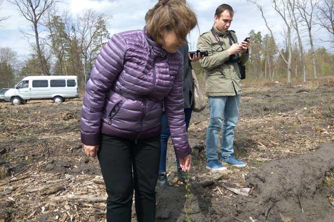Депутаты и журналисты проверили приживаемость саженцев в лесу Тольятти