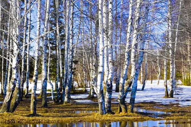 7 апреля – Благовещение: На Благовещение весна зиму поборола