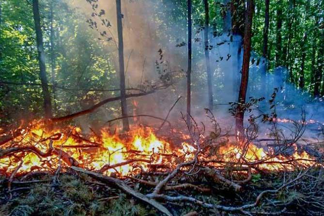 С 15 апреля 2019 года на территории Самарской области начнет действовать особый противопожарный режим