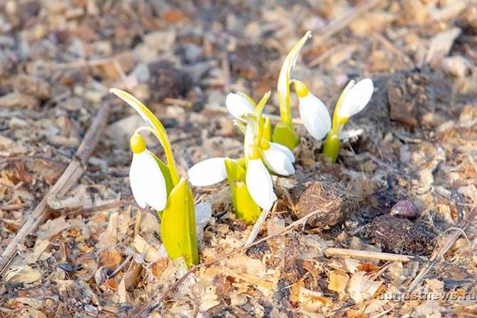 Погода в Тольятти со 2 по 5 апреля 2019 года