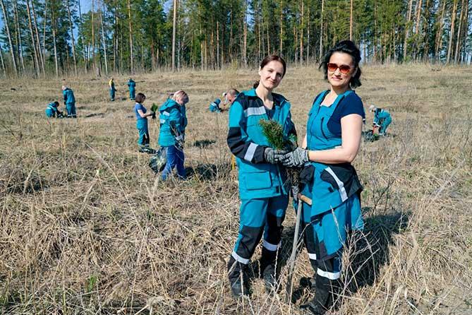 Молодые сеянцы сосны в районе 6 лесного квартала посадили работники предприятия «СИБУР Тольятти»