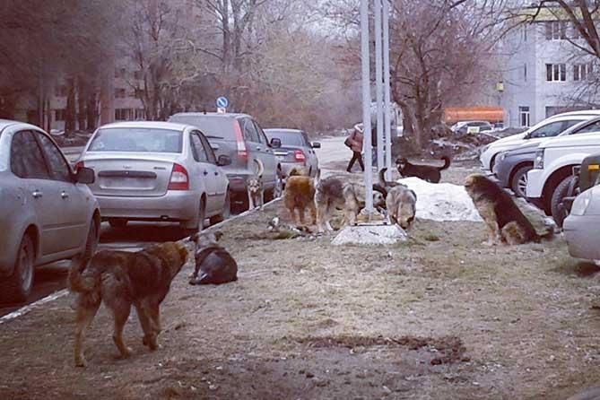 О местах и сроках отлова безнадзорных животных население Тольятти проинформируют в СМИ
