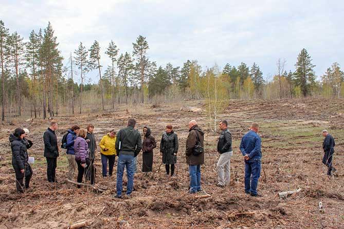 Погибших саженцев, высаженных осенью 2018 года, практически нет