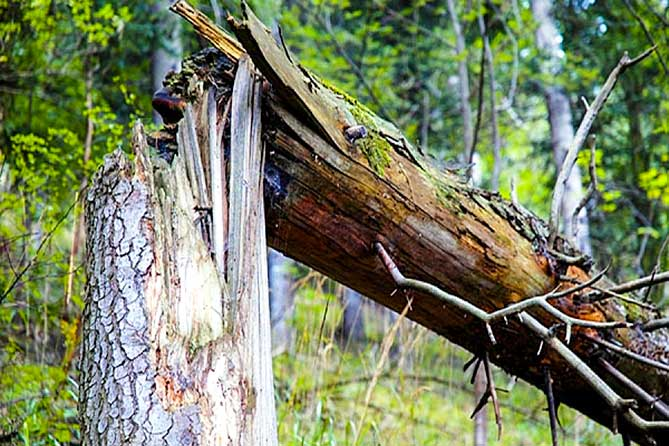В 2019 году в тольяттинском лесу пройдет лесопатологическое обследование