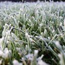 26 мая 2019 года в воздухе и на поверхности почвы ожидаются ночные заморозки