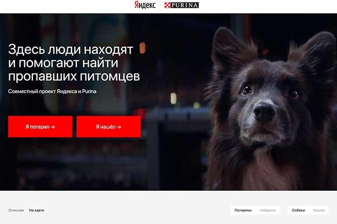 Жителям Тольятти найти пропавшую кошку или собаку поможет сервис Яндекс