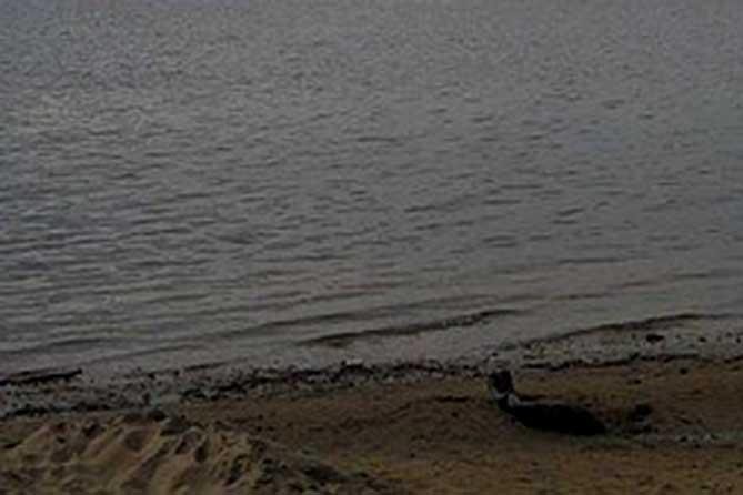 На городском пляже обнаружено тело 9-летнего мальчика, без признаков жизни