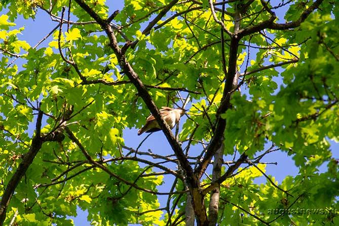 29 июня – Тихон: Затихают певчие птицы, кроме соловья