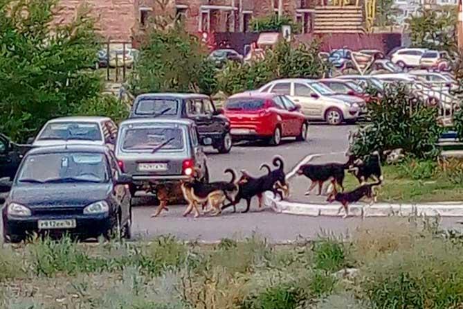 Решение проблем с безнадзорными животными в Тольятти
