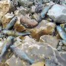 Начата проверка по факту массовой гибели рыбы на Волге в Климовке
