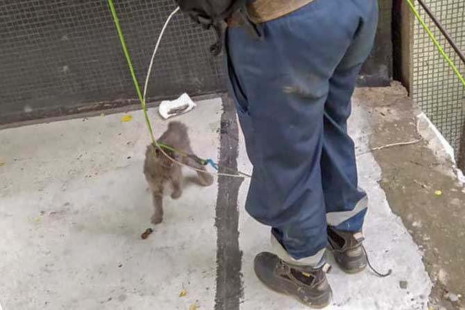 В шве дома застряла кошка: Спасателям удалось достать животное