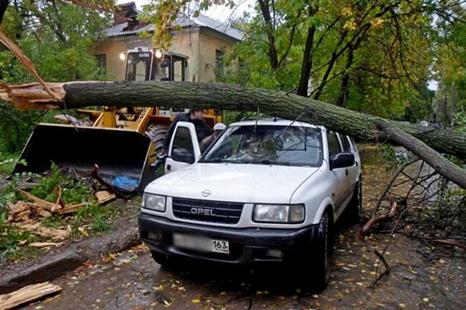 Обещанный сильный ветер повалил несколько деревьев 19 сентября 2019 года: Есть пострадавшие