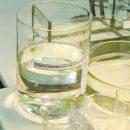 Специалисты провели опыт по хронической токсичности воды, отобранной в Волге в районе Тольятти 21 августа 2019 года