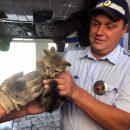 Испуганный котенок немного поцарапал своих спасителей, но в целом история спасения закончилась хорошо