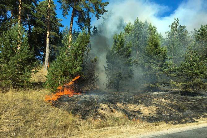 Под Тольятти лесной пожар тушили 84 человека