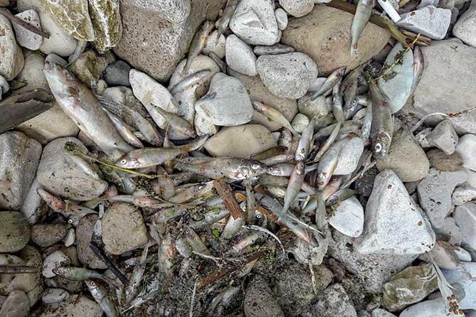 Ужесточение ответственности за экологические правонарушения в сфере водопользования
