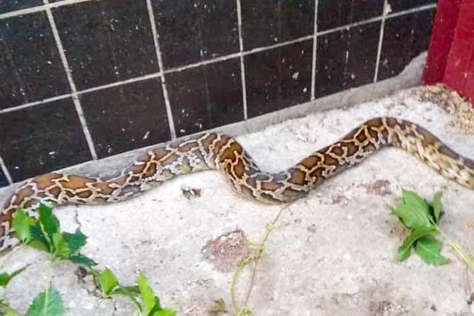 Когда же в этом доме в Тольятти змеи кончатся