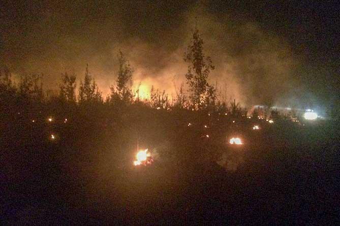 Предварительная причина лесных пожаров в Тольятти — поджог