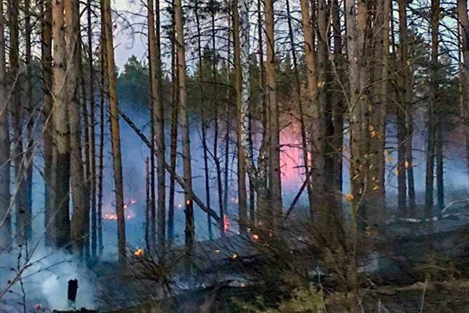 горит лес пожар огонь в деревьях