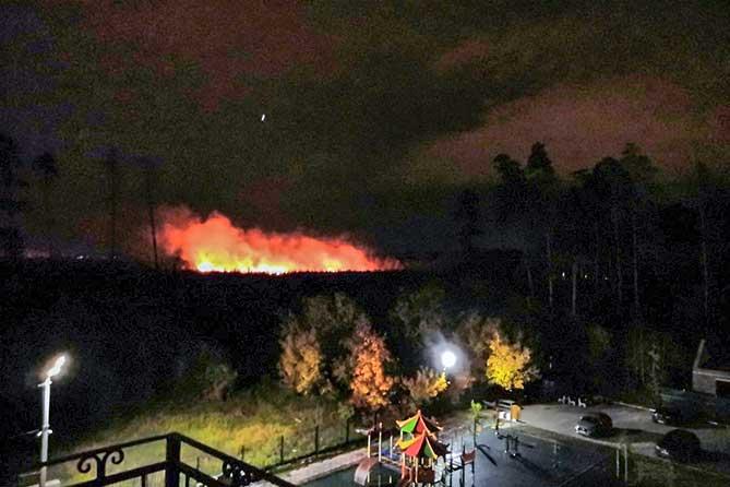 Пожар в лесу в районе Портпоселка в Тольятти ликвидирован 6 октября 2019 года
