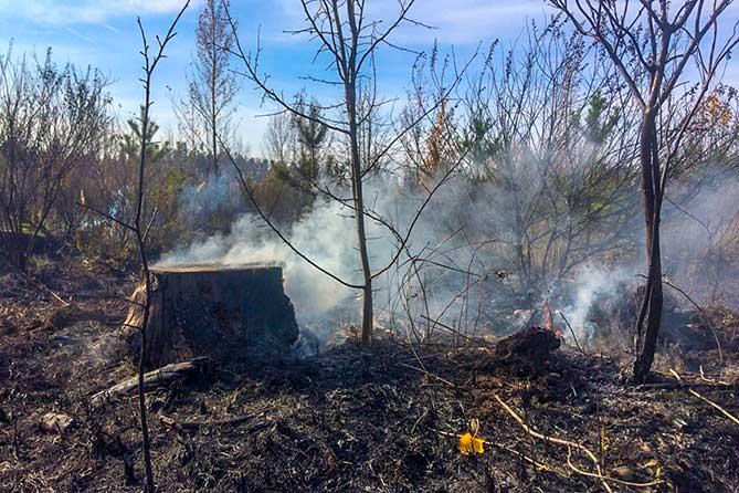 после пожара в лесу тольятти
