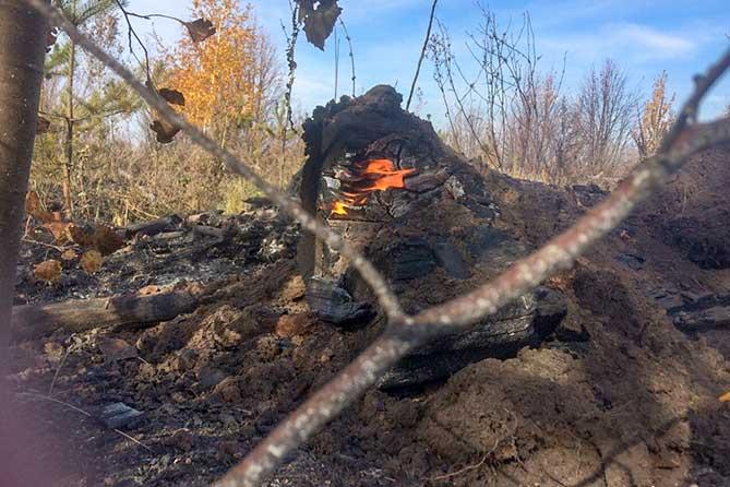 Лесу Тольятти требуется помощь добровольцев после пожара 6 октября 2019 года