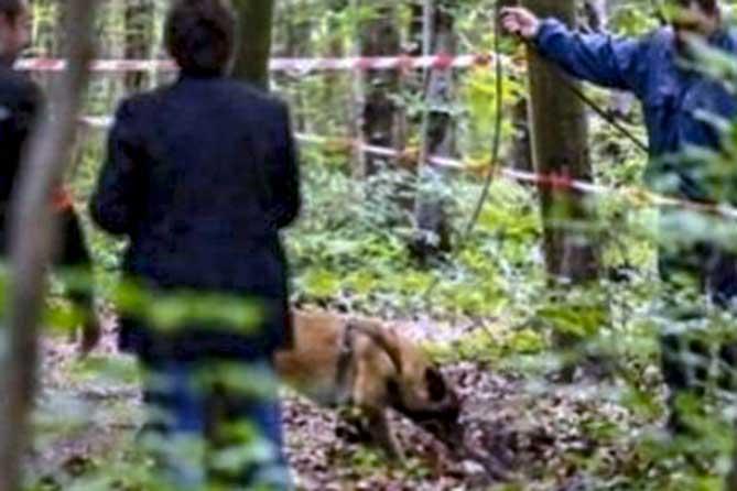 Тело убитого жителя Тольятти обглодали дикие животные: Появился подозреваемый