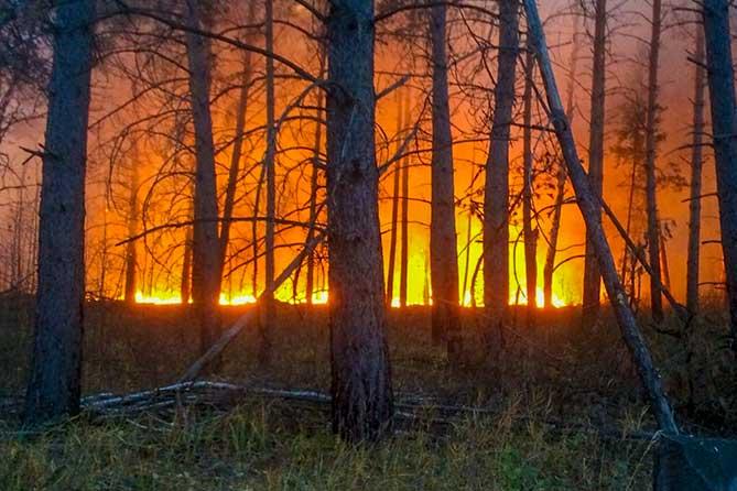 горит лес тольятти поздний вечер