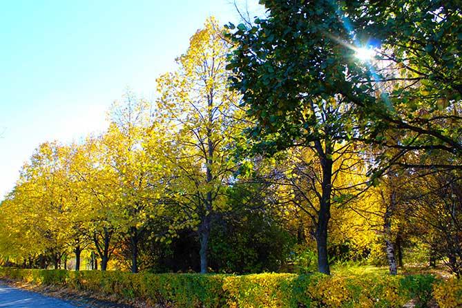 Погода в Тольятти с 22 по 25 октября 2019 года: Температура воздуха выше климатической нормы на 5 градусов