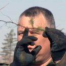 На посадку леса Тольятти: Это отличный повод собраться горожанам 18 и 19 октября 2019 года